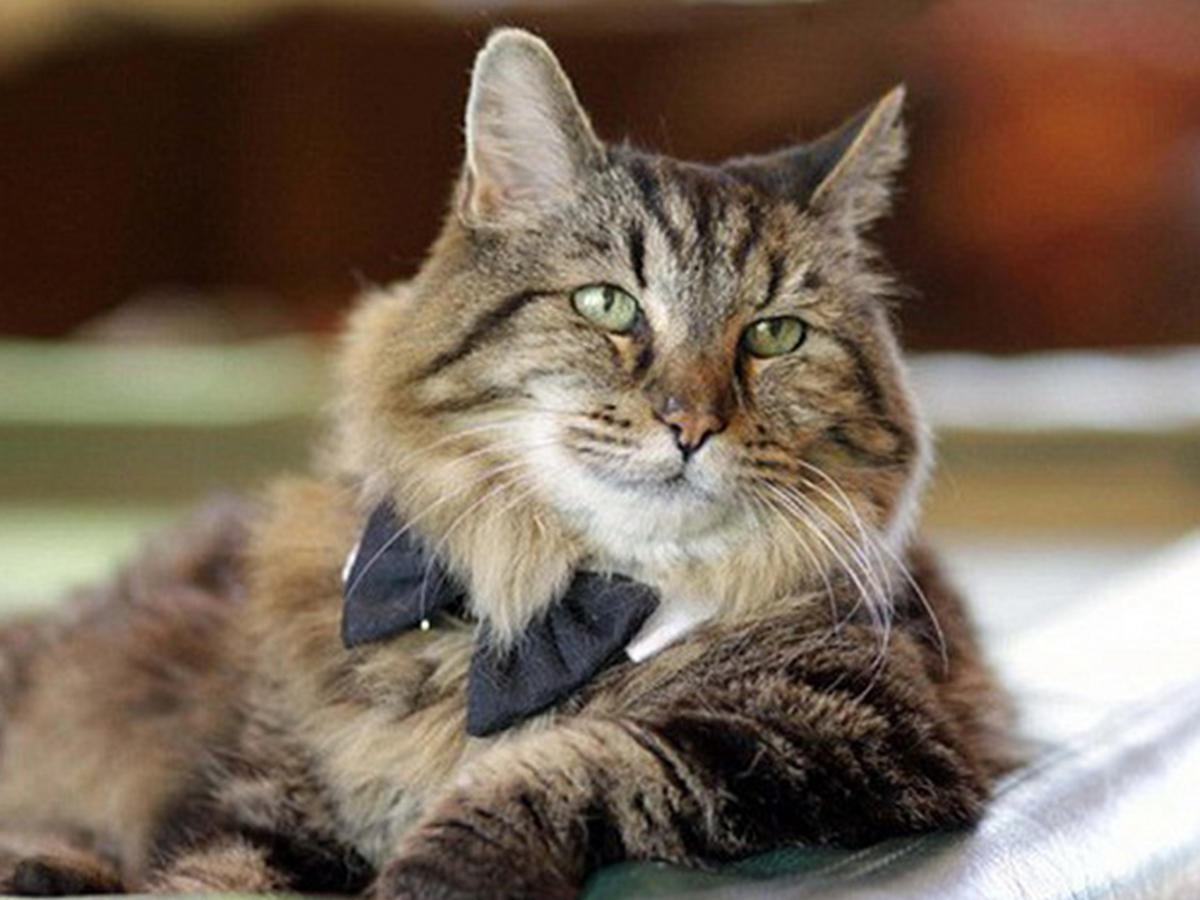 26-летний кот Вельвет стал звездой социальных сетей (фото)