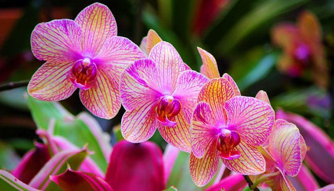 орхидея отцвела что делать со стрелкой