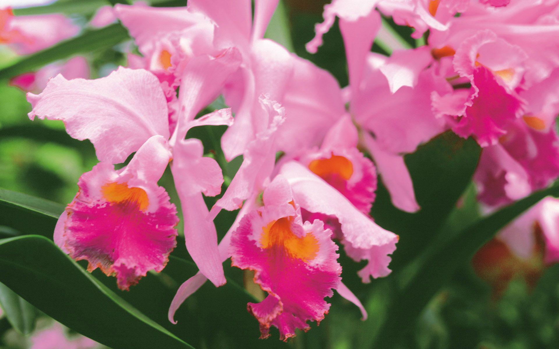 Как пересадить орхидею в домашних условиях пошагово: уход и полив