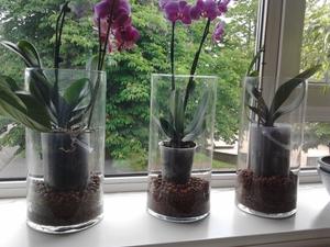 уход за орхидеями для новичков