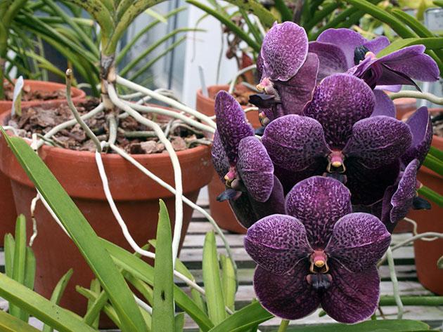 орхидеи пересадка и уход в домашних условиях