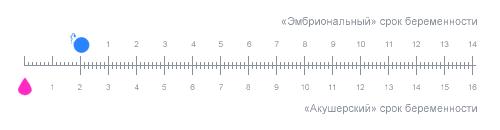 расчет беременности по неделям и дням точный расчёт