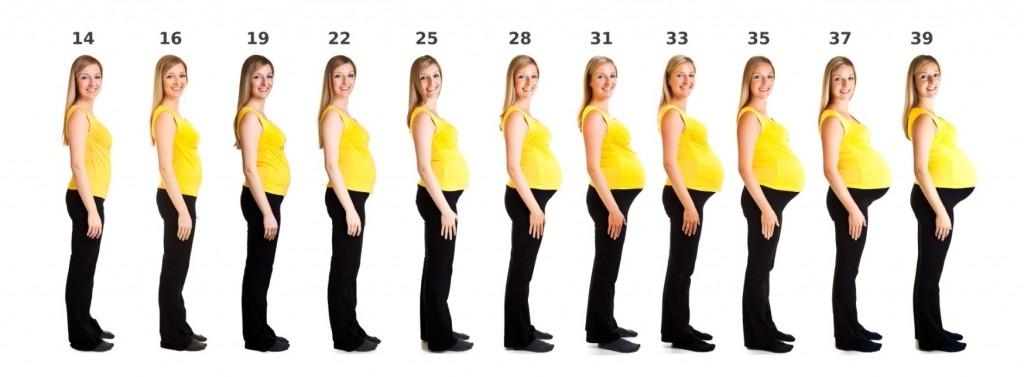 Калькулятор беременности по дням рассчитать срок