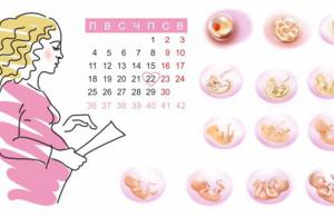 срок беременности по неделям рассчитать