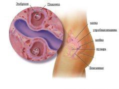 4 неделя беременности от зачатия, что происходит
