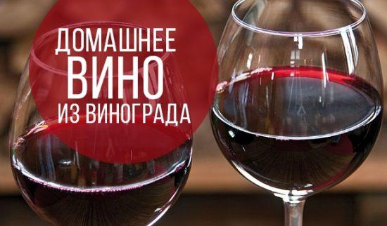 Вино из винограда Изабелла в домашних условиях: простой рецепт с фото