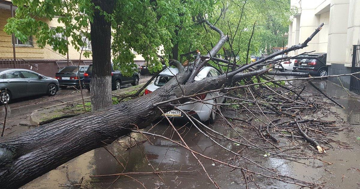 Во время урагана в Москве человека придавило деревом