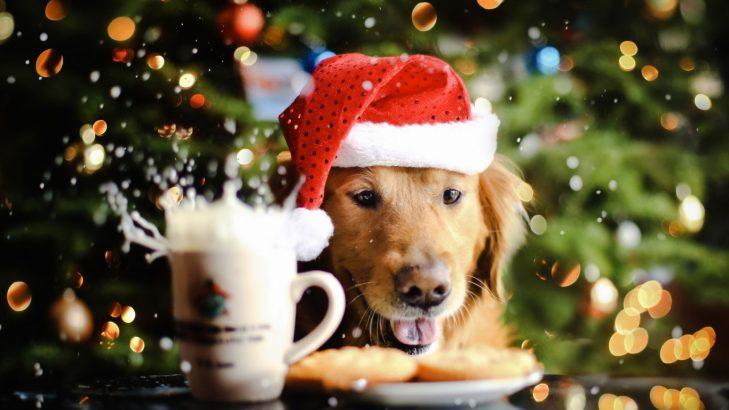 dog_new_year_drink_food_hat_spray_72210_1366x768