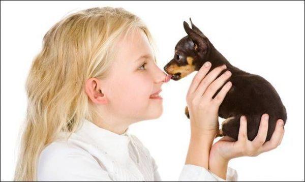 Часто лишай возникает из-за контакта с животными