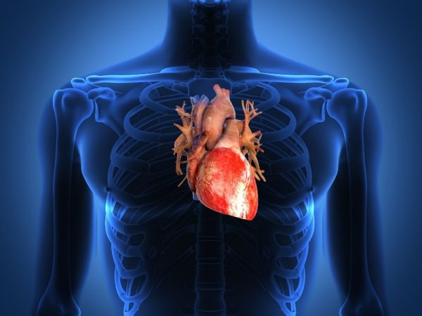 Арония избавляет от проблем с сердцем