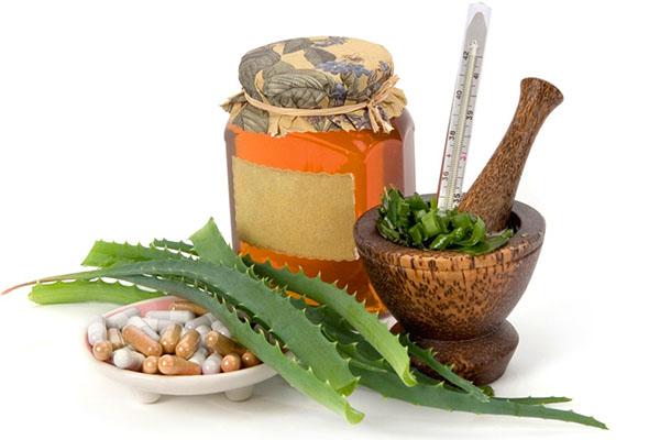 Алоэ: лечебные свойства и противопоказания, применение