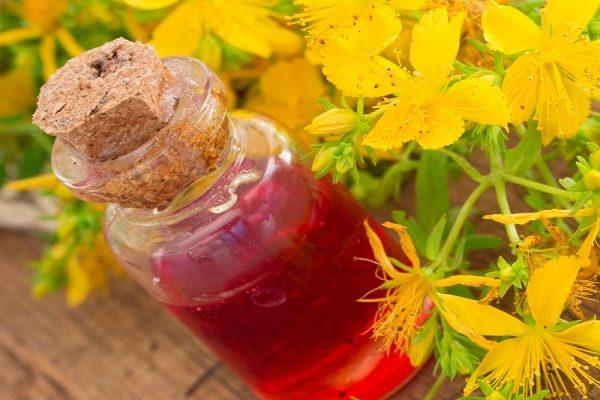 Зверобой трава: лечебные свойства и противопоказания, рецепты применения