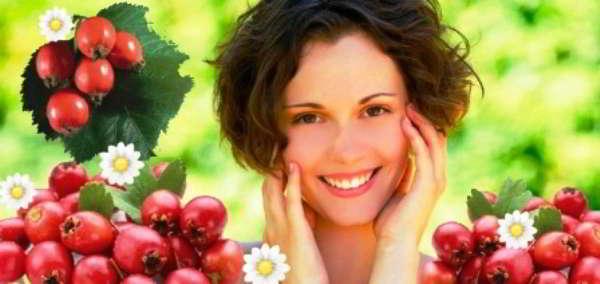 Боярышник: лечебные свойства и противопоказания, рецепты настойки