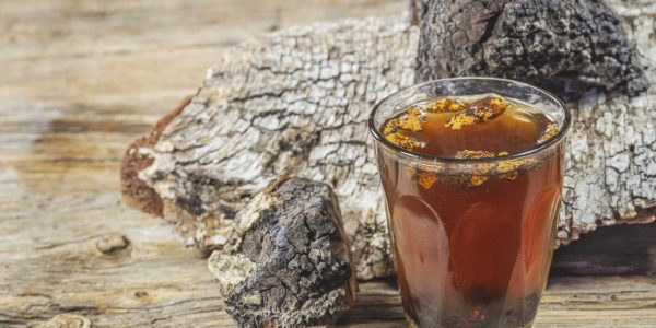 Настойку из этого древесного гриба рекомендовано принимать при онкологических заболеваниях