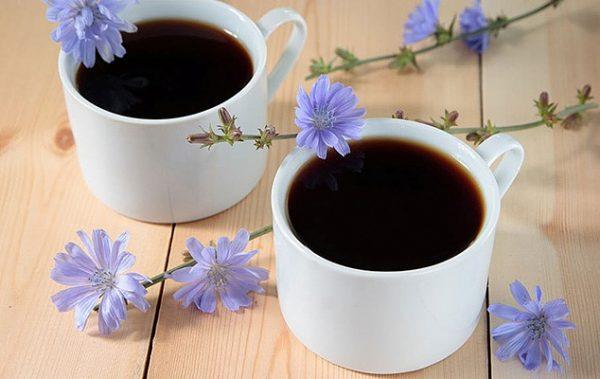 Цикорий может заменить обычное кофе