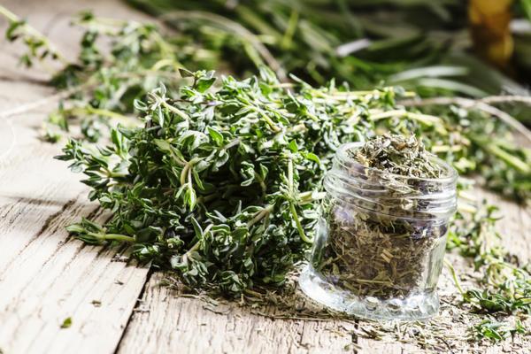 Высушенное растение используется в кулинарии