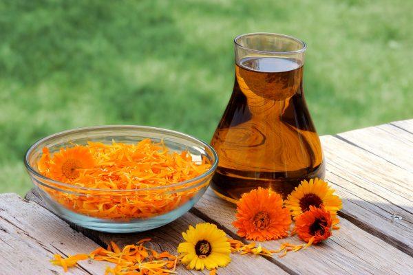 Календула: лечебные свойства и противопоказания, рецепты народной медицины