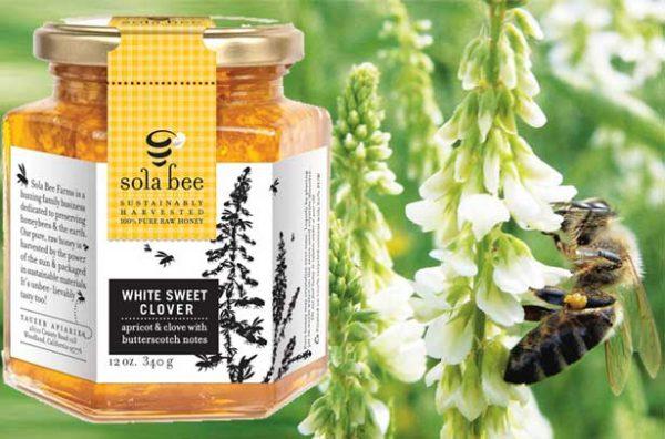 Вкусный мед из белого донника