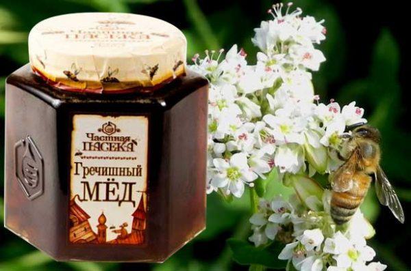 Гречишный мед полезное средство для мужчин