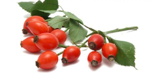 Шиповник: лечебные свойства и противопоказания, применение