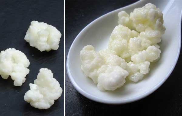 Как выглядит молочный гриб