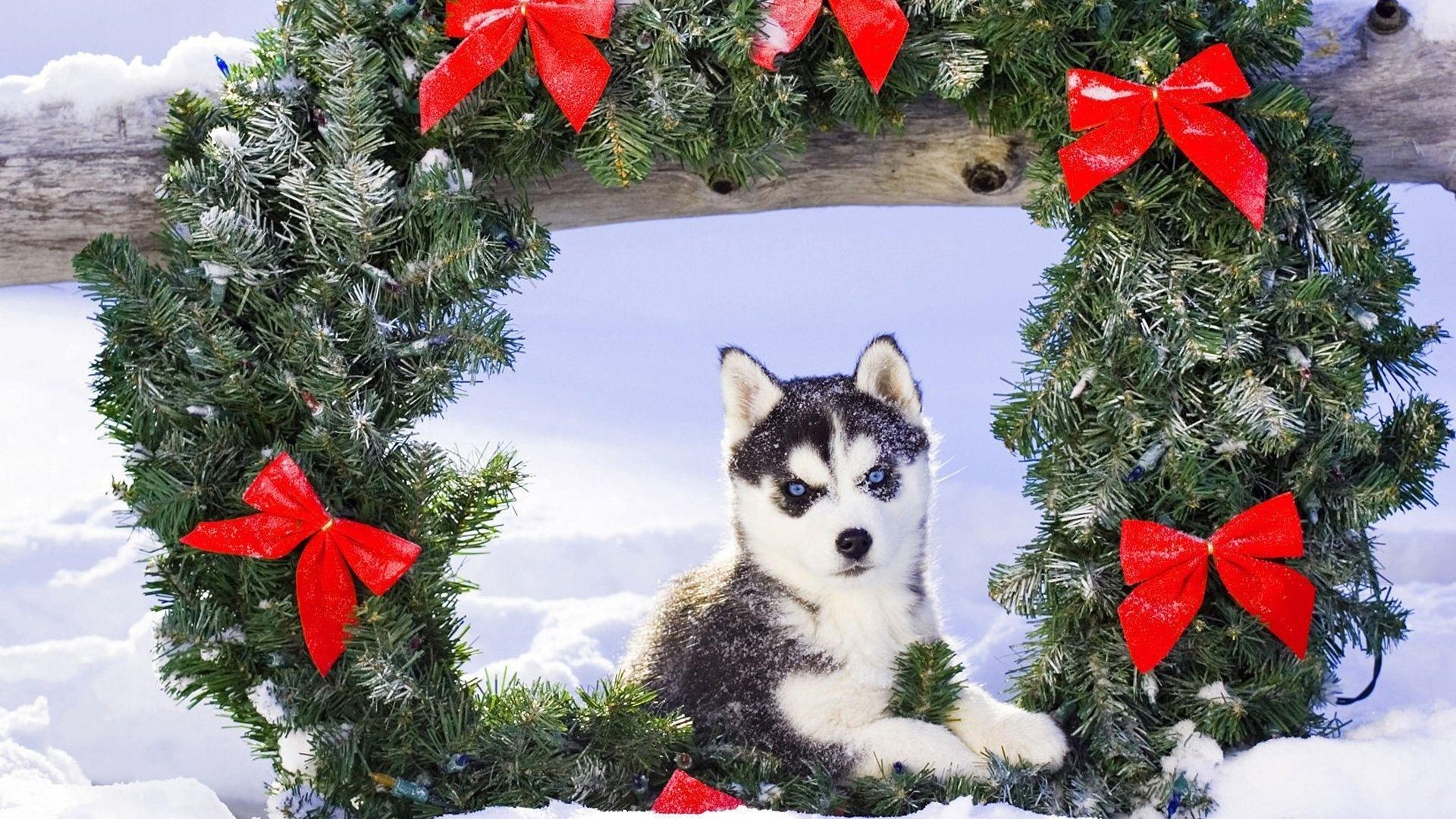 Рождественский венок с символом наступающего года
