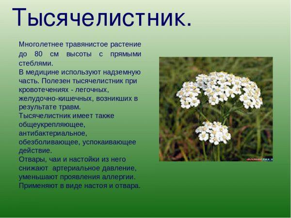 Краткое описание растения