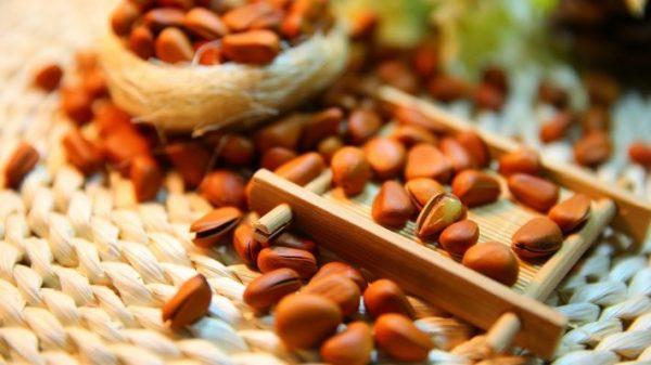 Сибирские кедровые орехи являются самым полезным продуктом