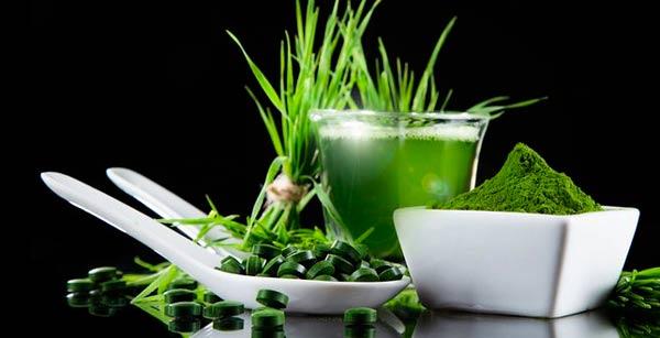 Спирулина: полезные свойства и противопоказания, применение в народной медицине