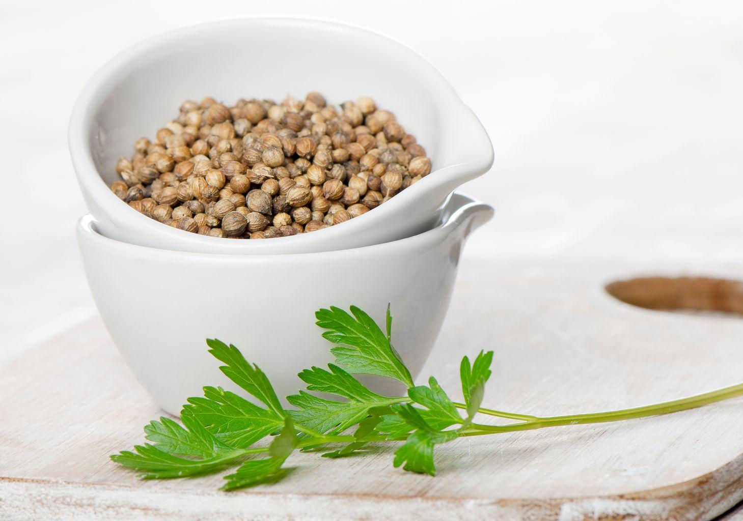 Для приготовления лекарственного настоя или отвара из плодов кориандра, их измельчают в ступе