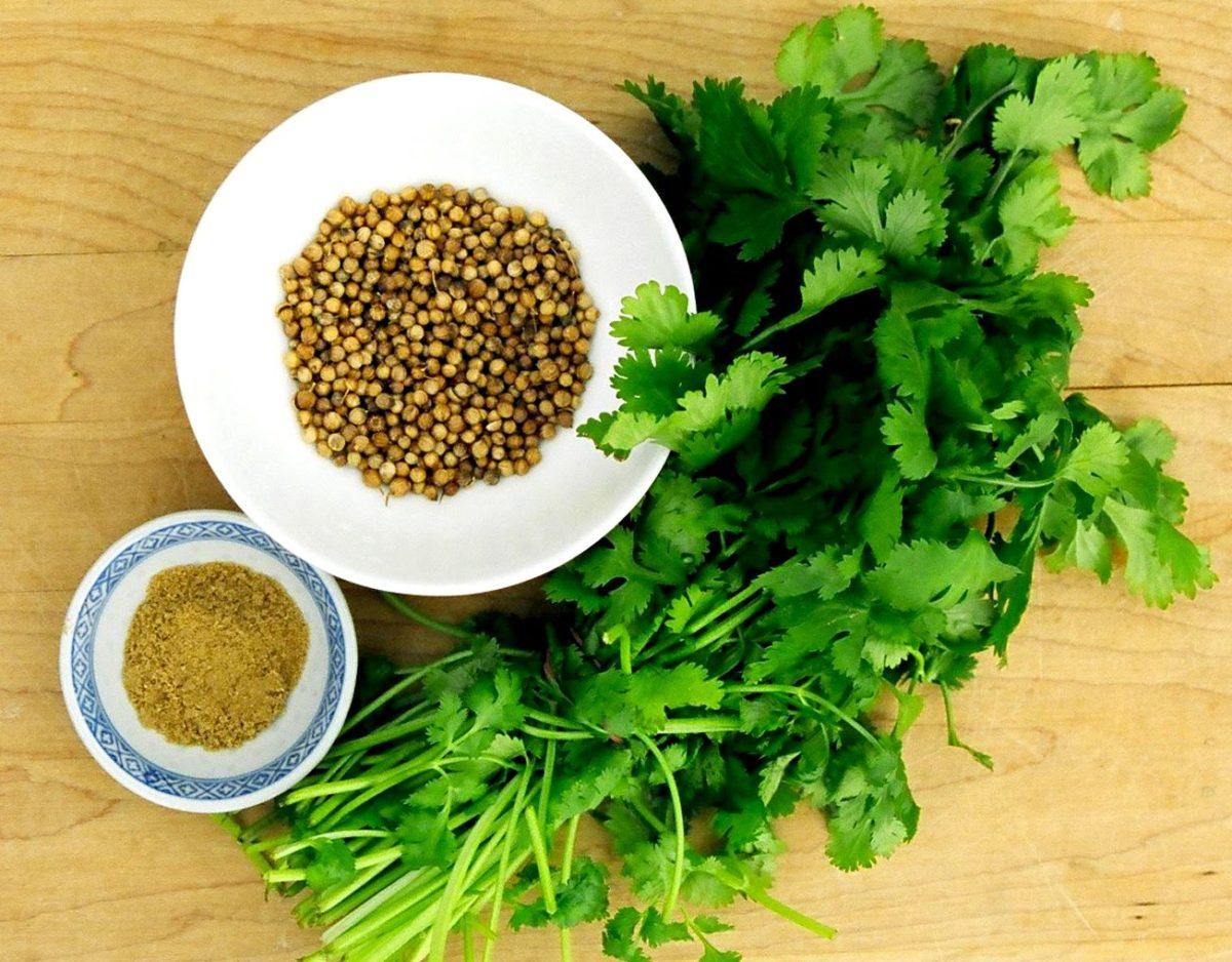 Кориандр отличная приправа к пище и надежное лекарственное средство
