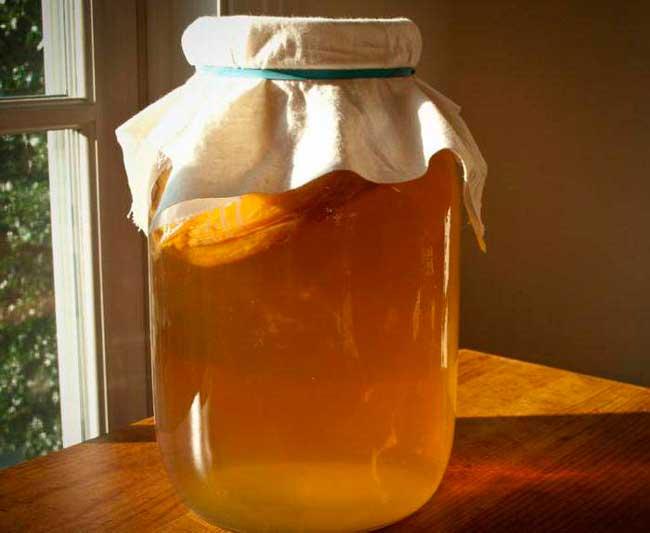 вырастить чайный гриб в домашних условиях несложно