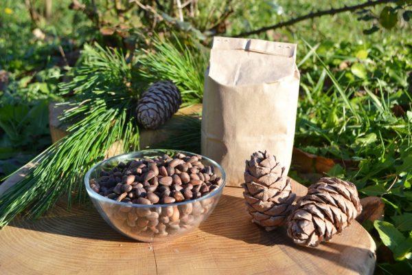 Кедровые орехи являются богатым источником белка и жирных кислот
