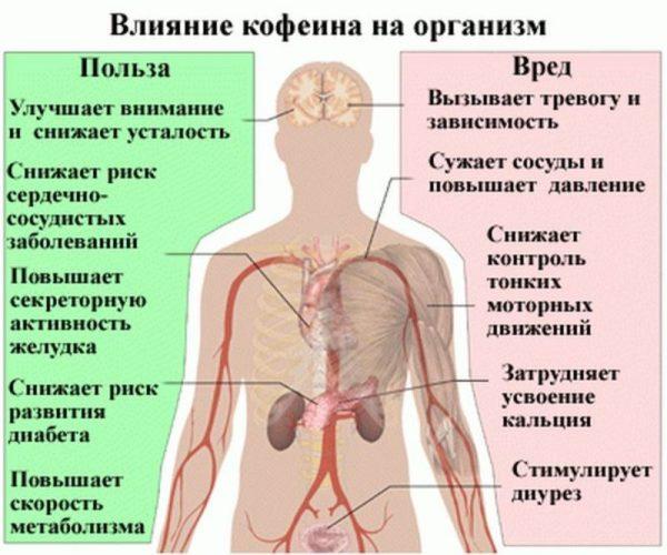 Как кофе действует на организм человека