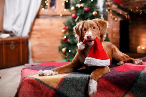 Новый год 2018 по фэн-шуй: как правильно встретить год Собаки