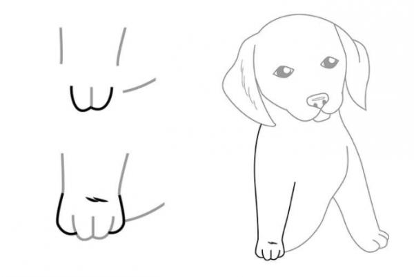 Как нарисовать сидящую собаку - фото 7