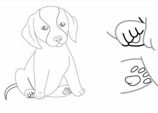 Как нарисовать сидящую собаку - фото 8