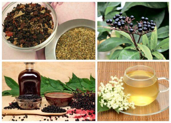 Черная бузина поможет вылечить от бронхита и простудных заболеваний
