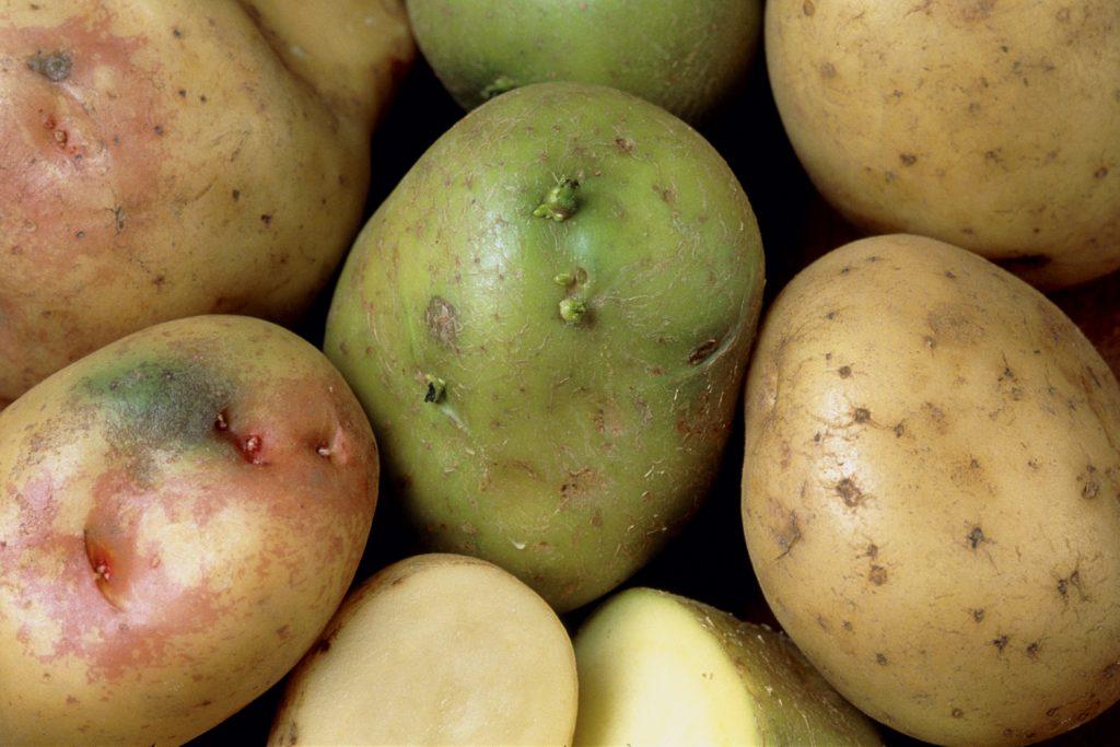 greenpotato