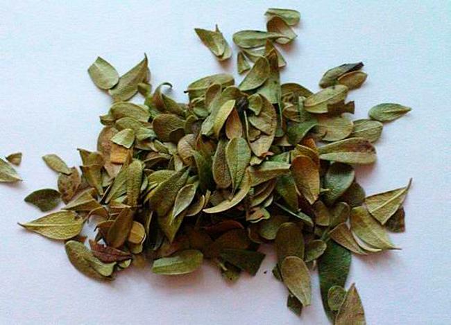 Сушка листьев включает ряд особенностей
