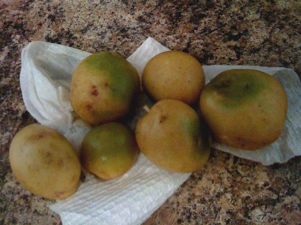 В чем опасность зеленой картошки?