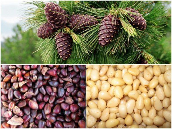 В кедровых орехах содержится большое количество полезных компонентов