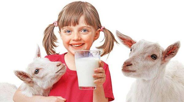 Козье молоко очень полезно для детей