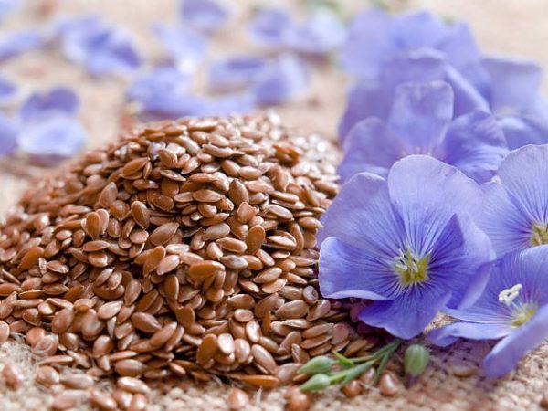 Семя льна помогает регулировать обмен веществ