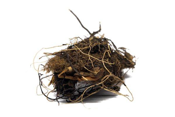 Марий корень содержит в себе большое количество полезных веществ