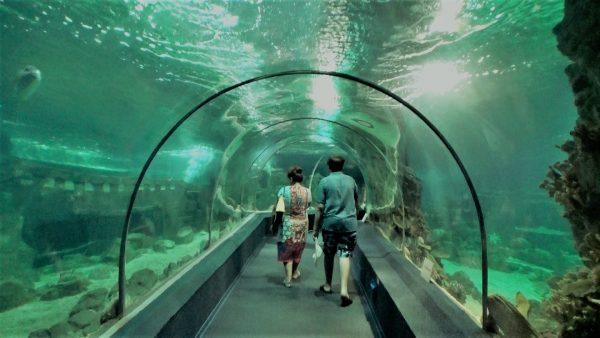Аквариумная арка