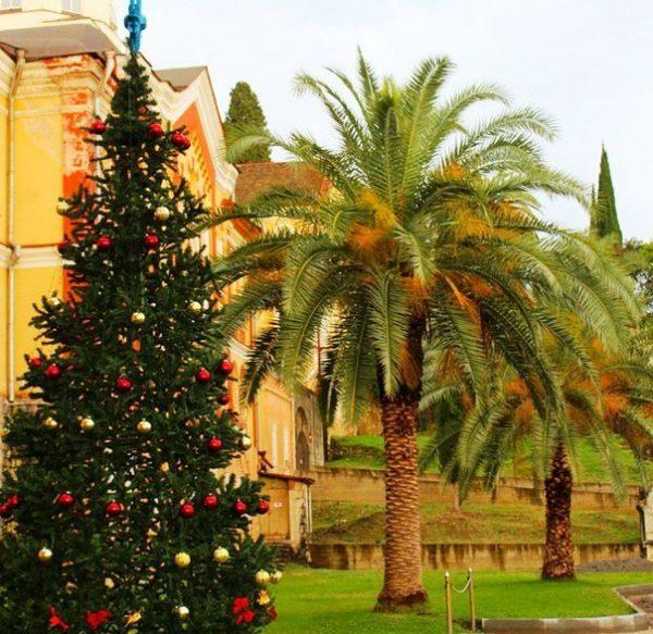Экзотические пальмы и новогодняя елка