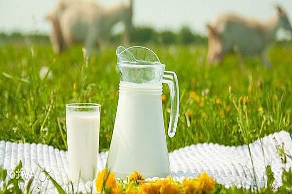 Козье молоко очищает сосуды