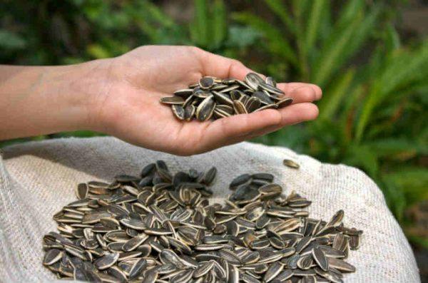 В сырых семечках содержится большое количество витаминов