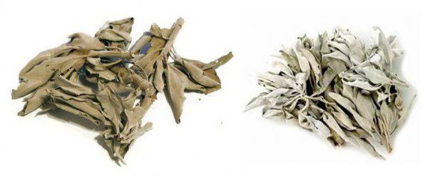 Высушенные листья шалфея